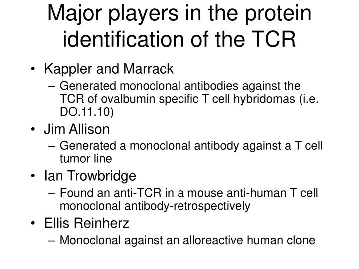 Major players in the protein identification of the TCR
