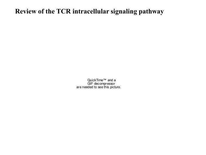 Review of the TCR intracellular signaling pathway
