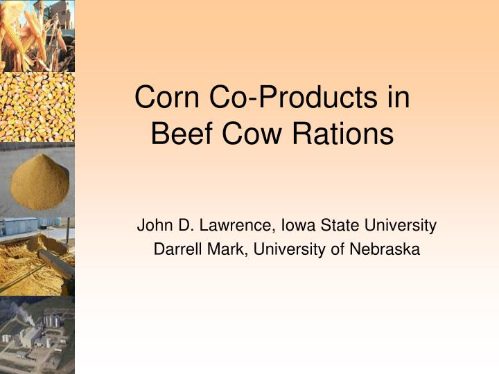 Corn co products in beef cow rations