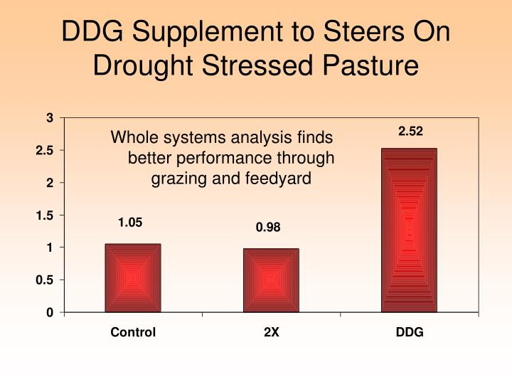 DDG Supplement to Steers On Drought Stressed Pasture