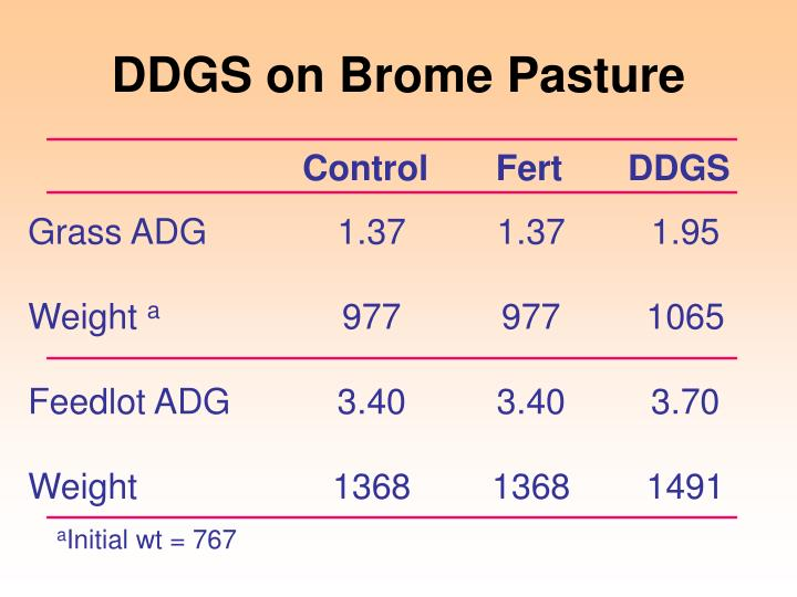 DDGS on Brome Pasture
