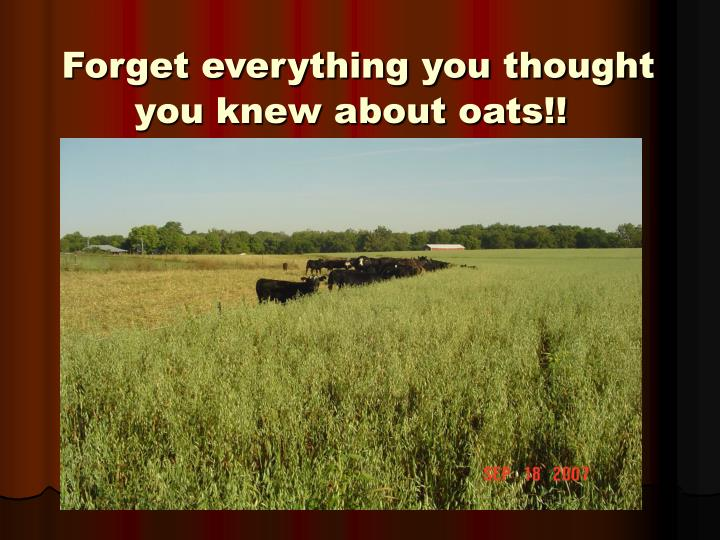 Forget everything you thought you knew about oats!!