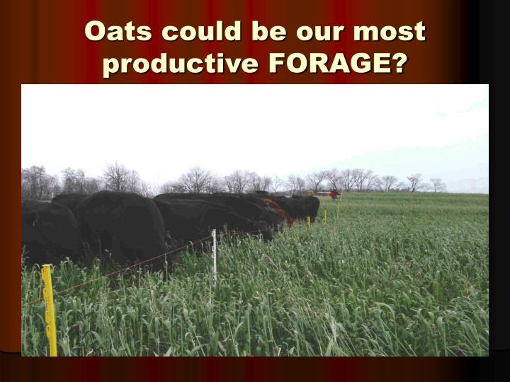 Oats could be our most productive FORAGE?