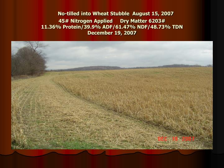 No-tilled into Wheat Stubble  August 15, 2007