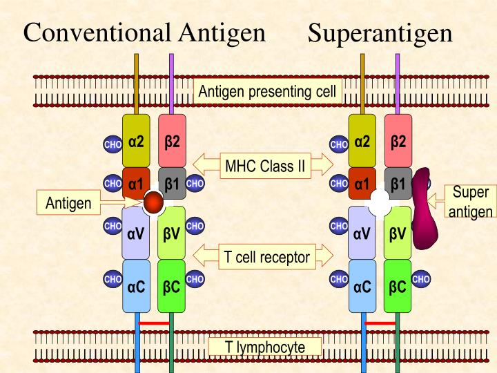 Conventional Antigen