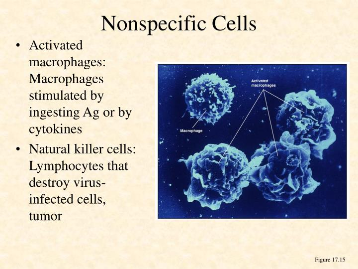 Nonspecific Cells
