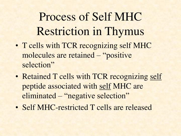 Process of Self MHC Restriction in Thymus