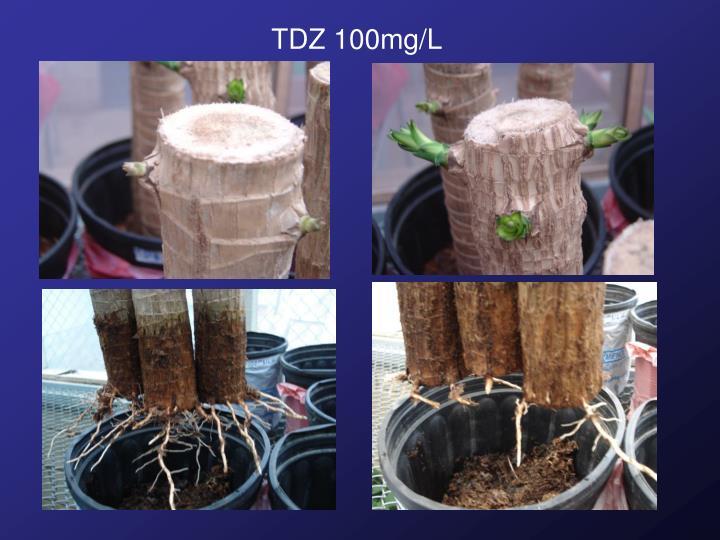 TDZ 100mg/L