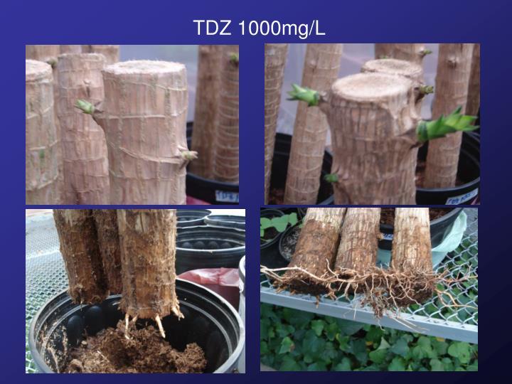 TDZ 1000mg/L