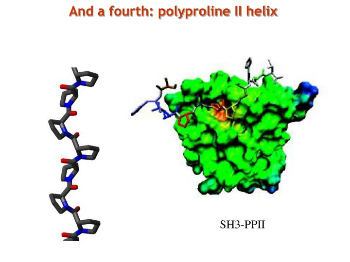 And a fourth: polyproline II helix