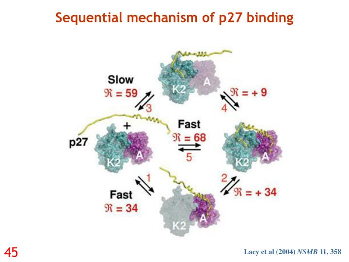 Sequential mechanism of p27 binding