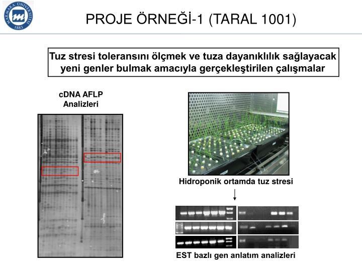 Tuz stresi toleransını ölçmek ve tuza dayanıklılık sağlayacak yeni genler bulmak amacıyla gerçekleştirilen çalışmalar