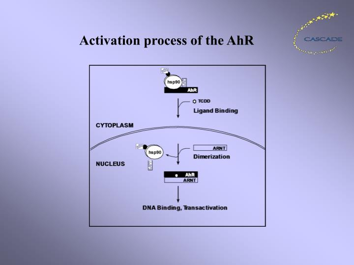 Activation process of the AhR