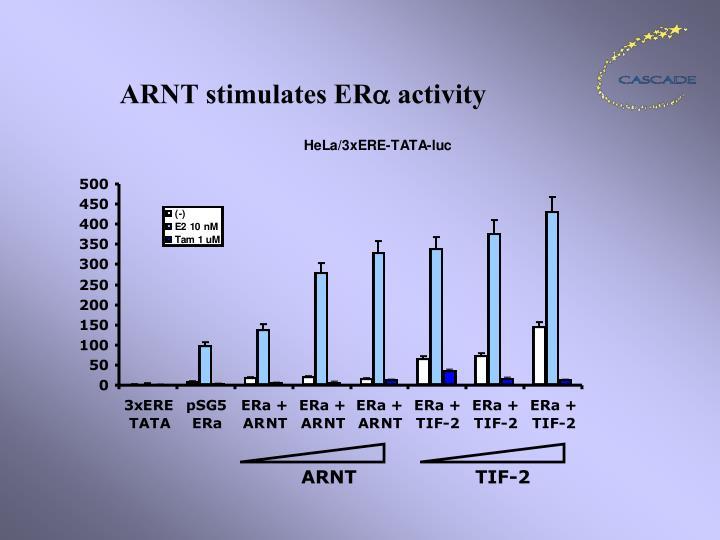 ARNT stimulates ER