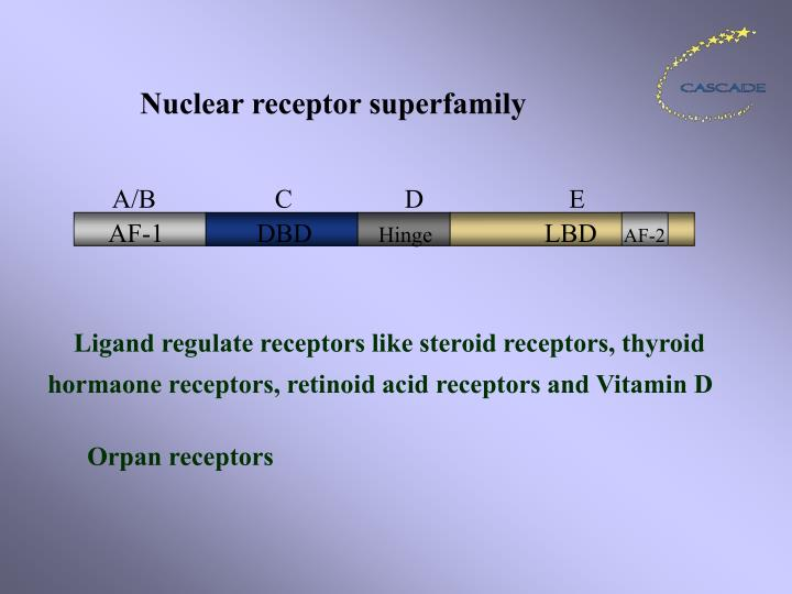 Nuclear receptor superfamily