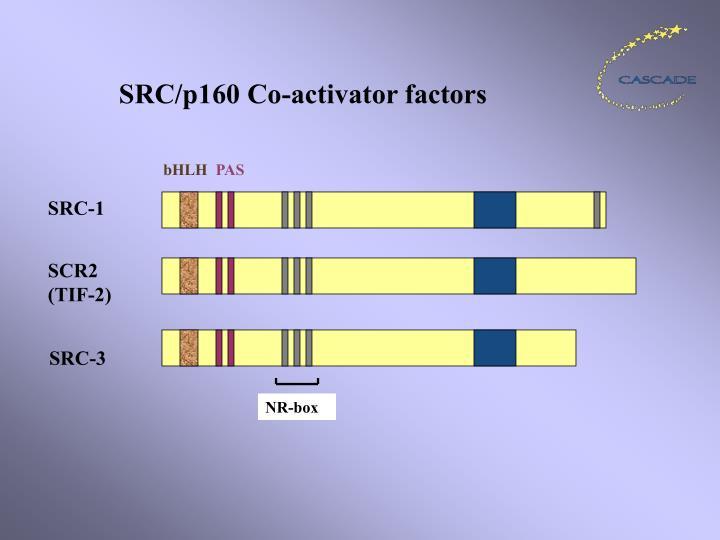 SRC/p160 Co-activator factors