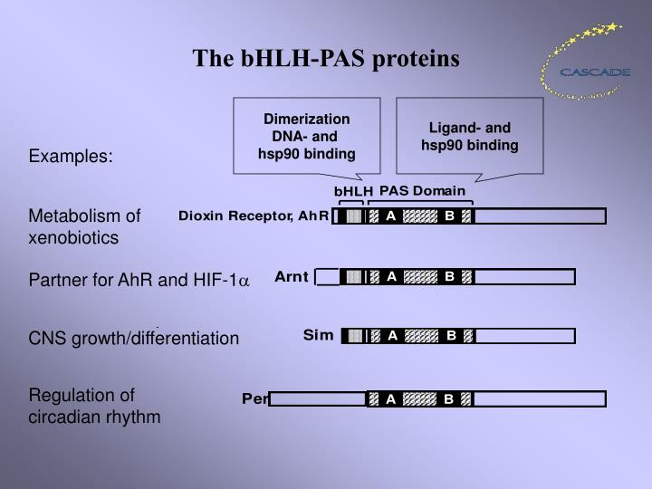 The bhlh pas proteins