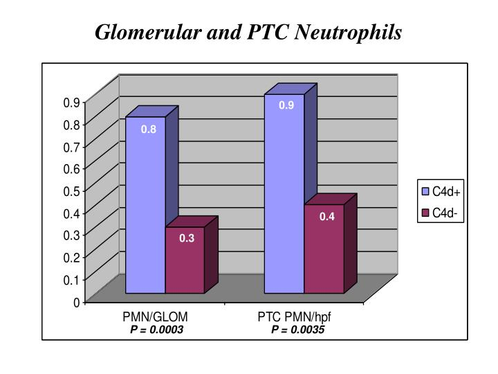 Glomerular and PTC Neutrophils