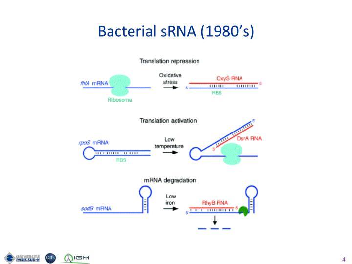 Bacterial sRNA (1980's)