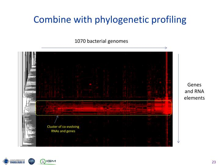 Combine with phylogenetic profiling