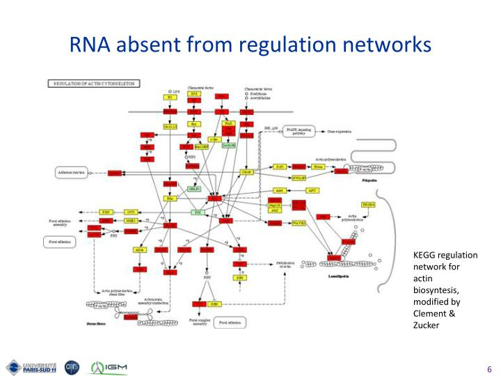 RNA absent from regulation networks