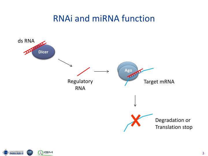 RNAi and miRNA function