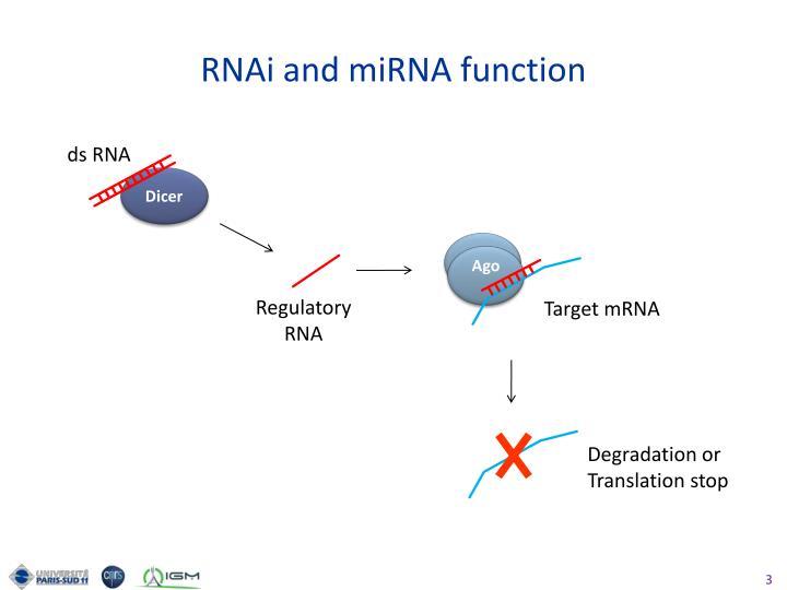 RNAi and miRNA function