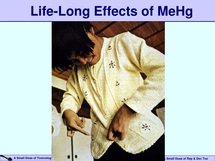 Life-Long Effects of MeHg
