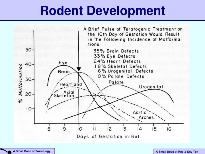 Rodent Development