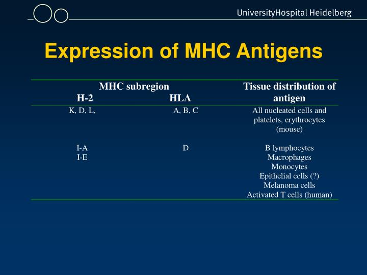 Expression of MHC Antigens