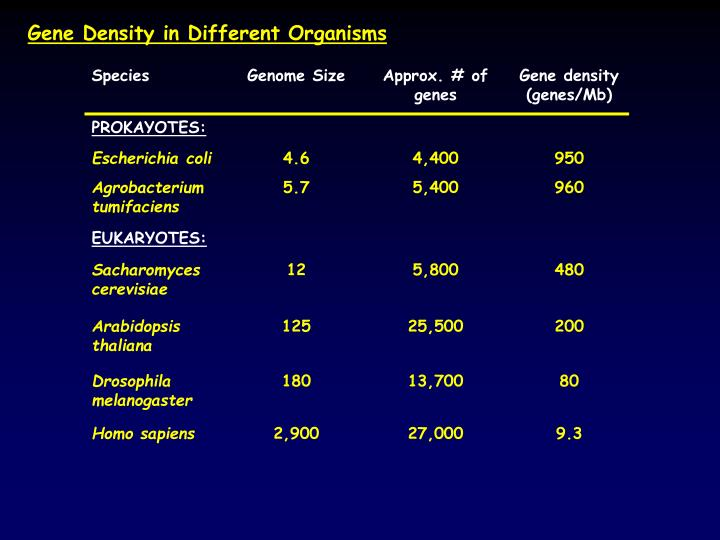 Gene Density in Different Organisms