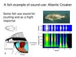 a fish example of sound use atlantic croaker