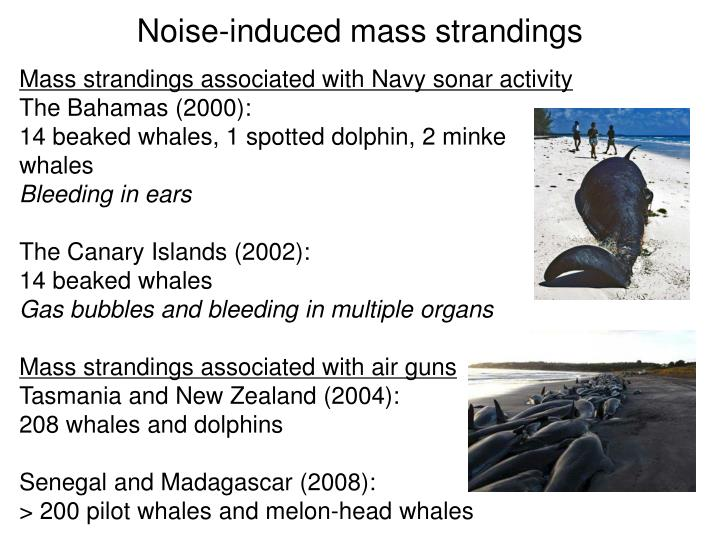 Noise-induced mass strandings