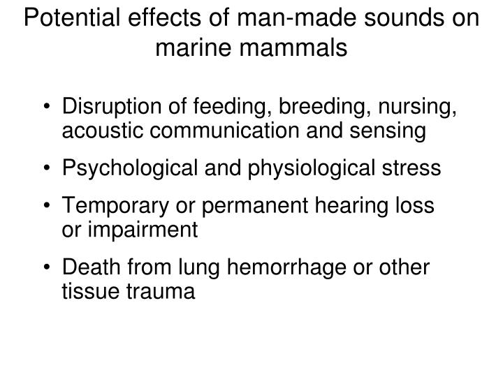 Potential effects of man-made sounds on marine mammals