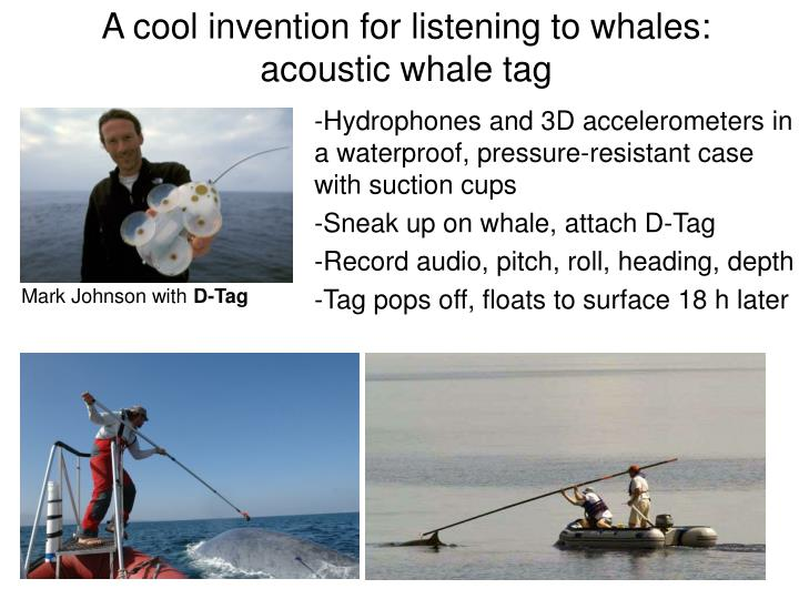 A cool invention for listening to whales: