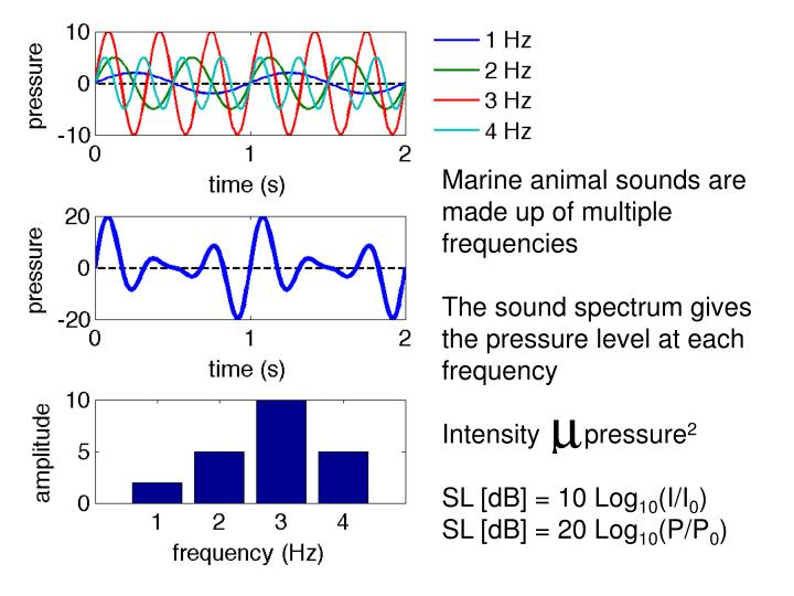 Marine animal sounds are made up of multiple frequencies