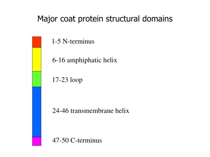 Major coat protein structural domains