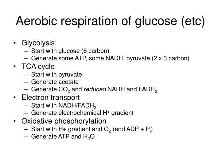 Aerobic respiration of glucose (etc)