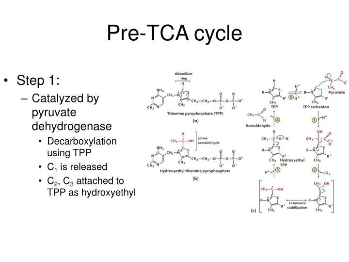 Pre-TCA cycle