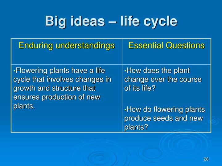 Big ideas – life cycle