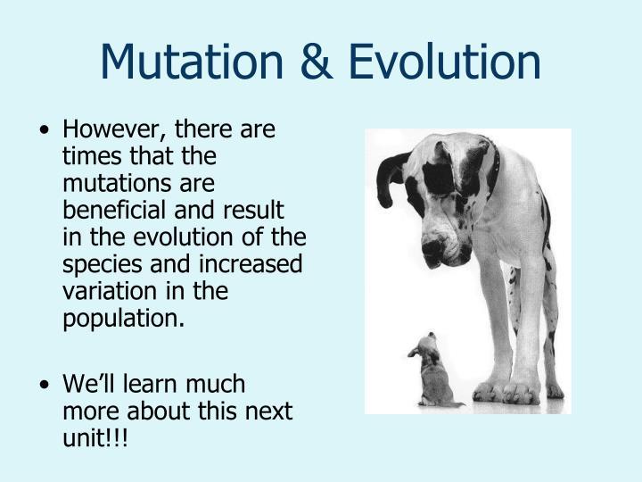 Mutation & Evolution