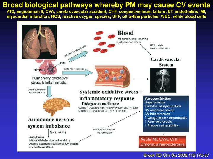 Broad biological pathways whereby PM may cause CV events