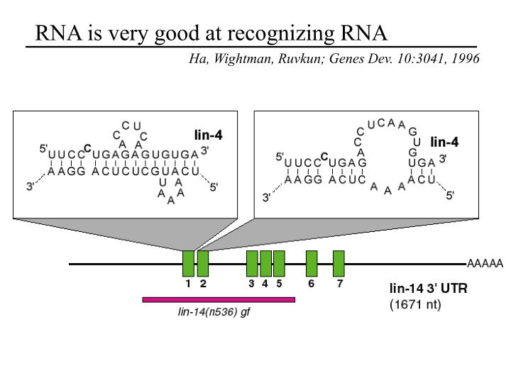 RNA is very good at recognizing RNA
