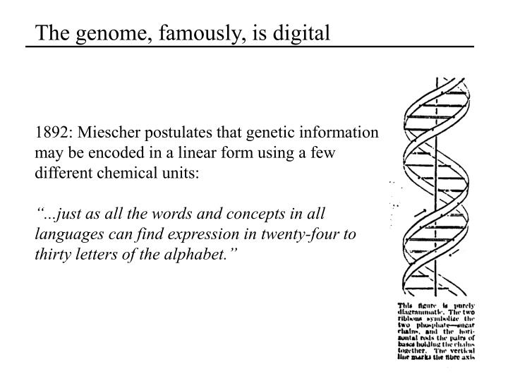 The genome famously is digital