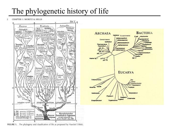 The phylogenetic history of life