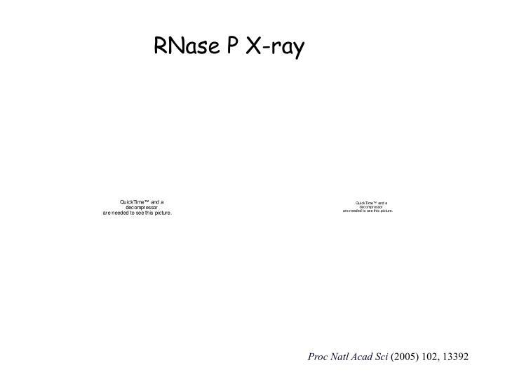 RNase P X-ray