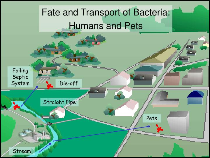 Fate and Transport of Bacteria:
