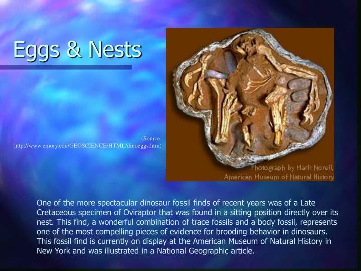 Eggs & Nests