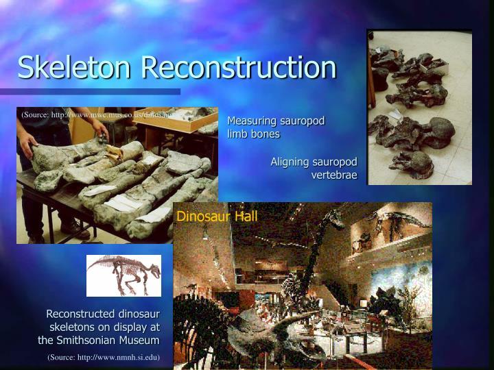 Skeleton Reconstruction