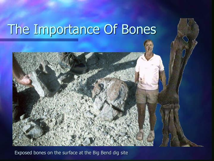 The Importance Of Bones